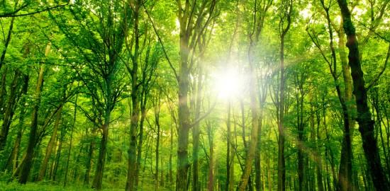 緑色のパワーストーンに秘められたパワーの特徴